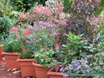 Courtyard Garden - Winter - end of June 2013
